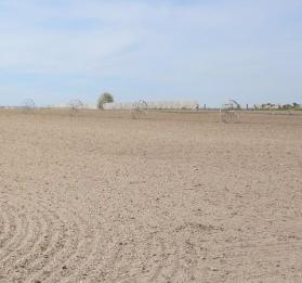 katrina running sociology - dry field